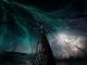 branches-neu_Felix_z